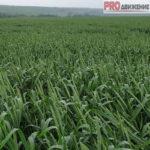 технологии сельскохозяйственных культур